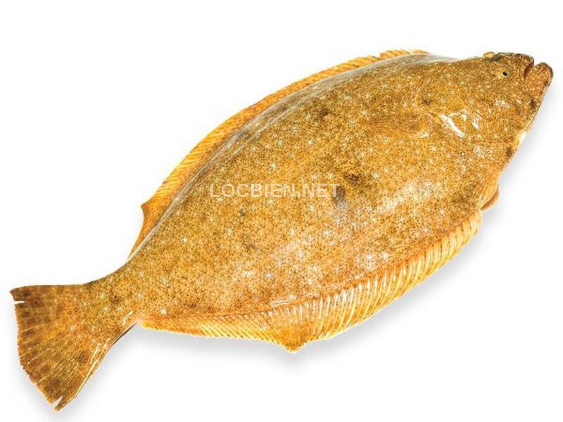 giá cá bơn vàng hàn quốc